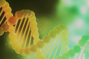 Knack DNA