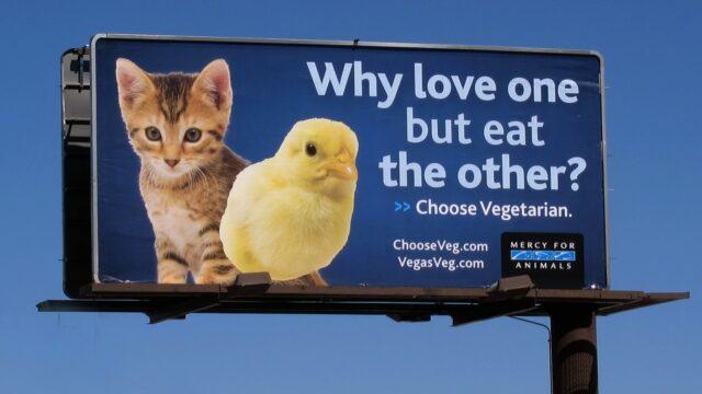 dierenrechten